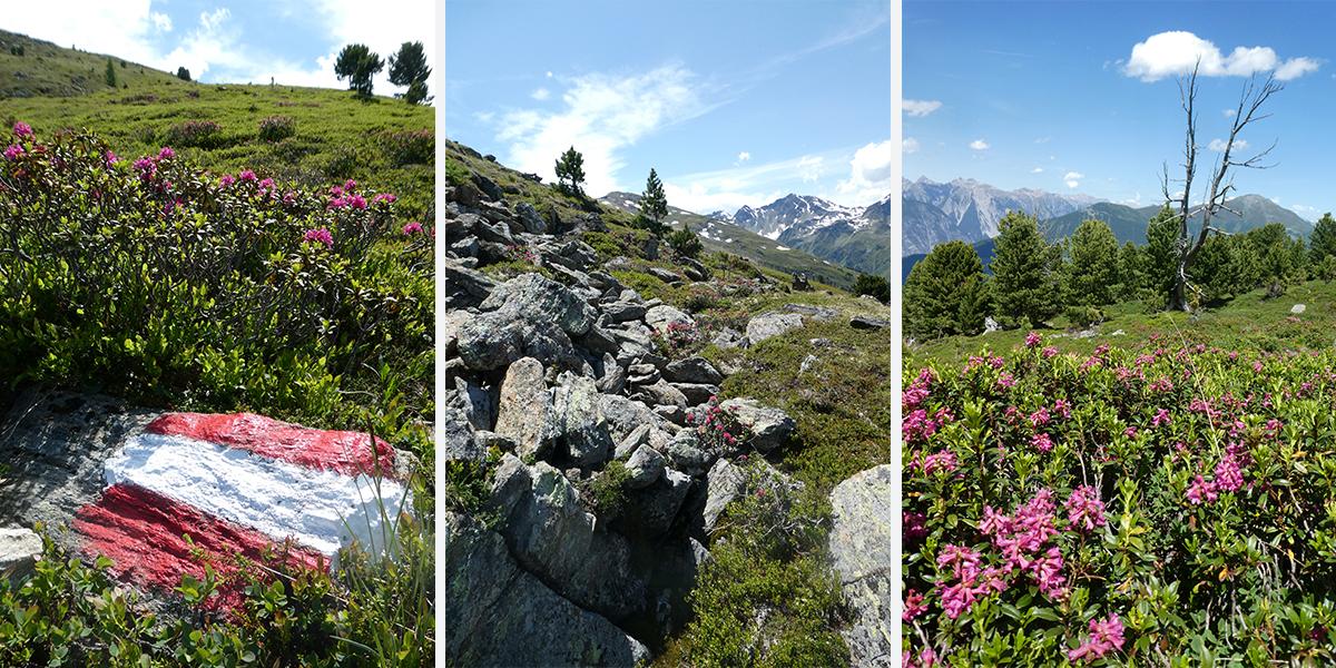 Alpenrosensteig